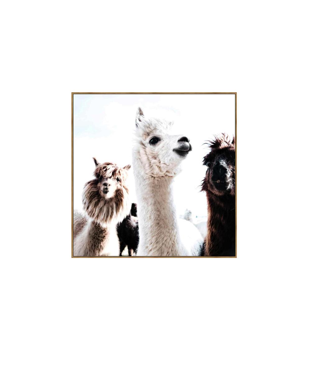 Cheeky Llama