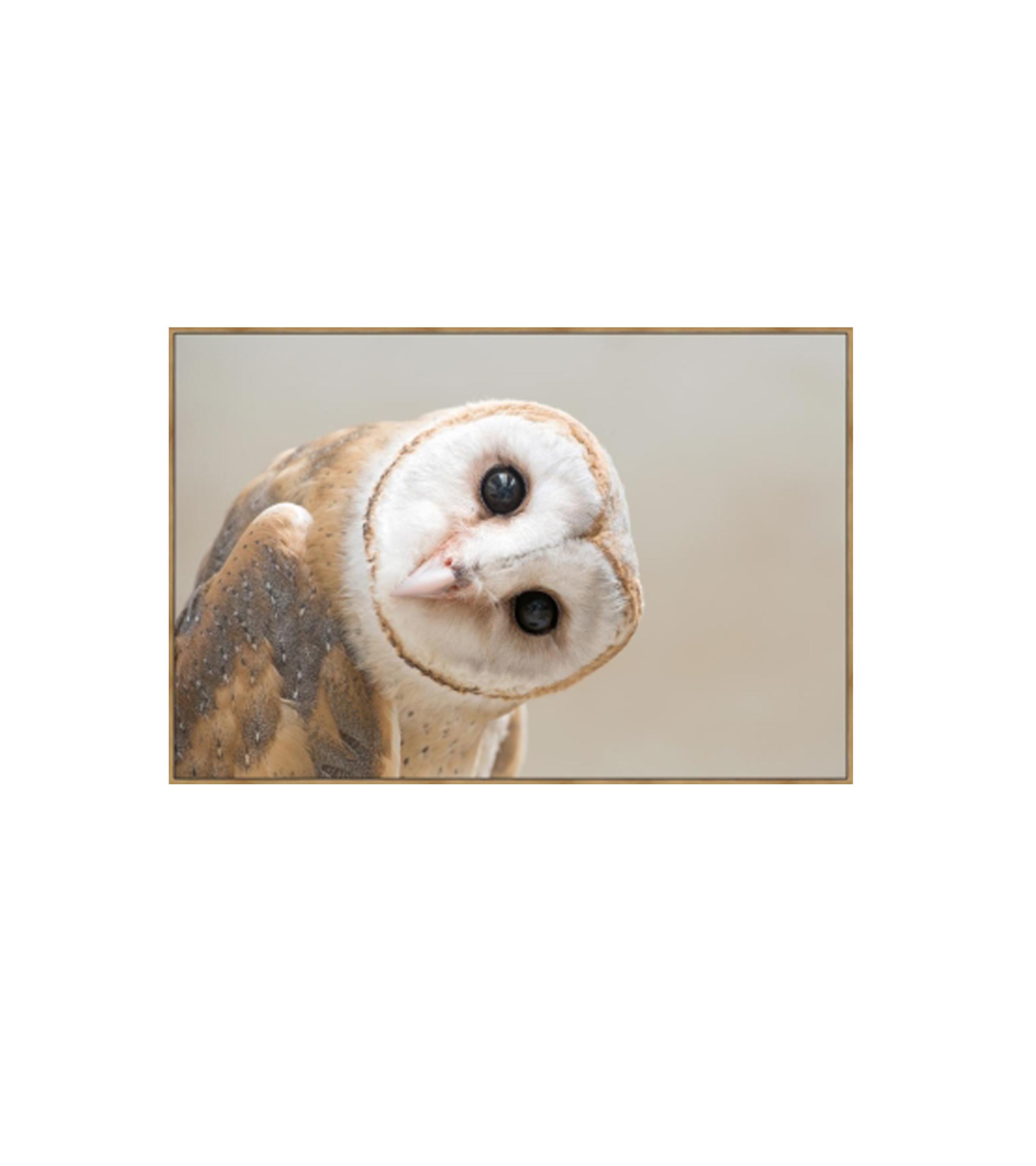 Cheeky owl