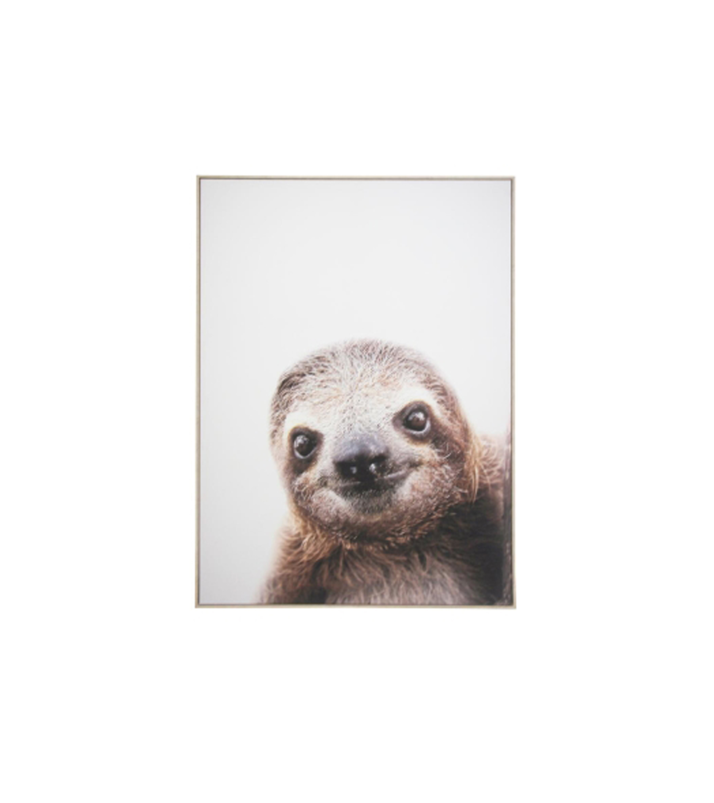Stevie sloth